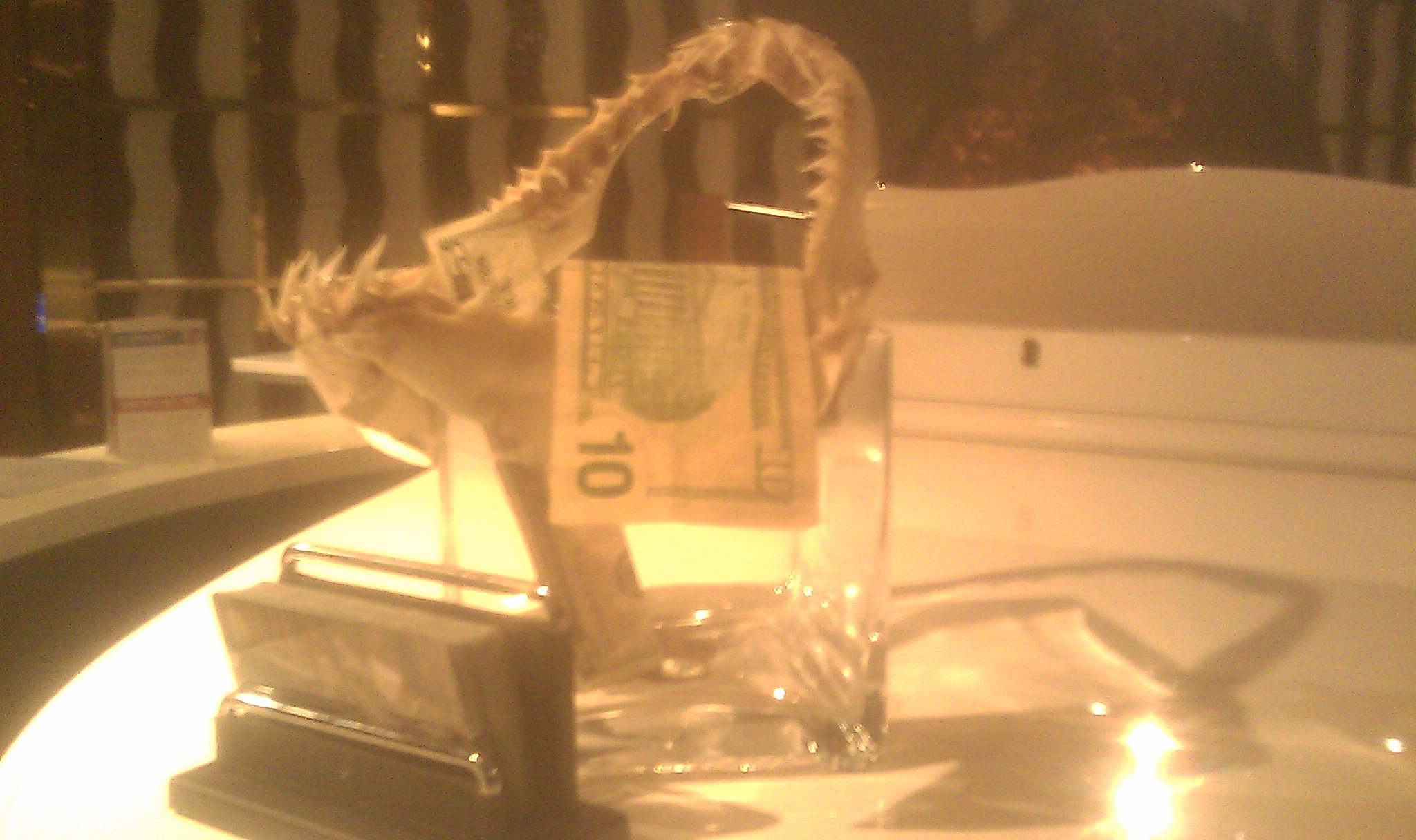 Mako shark jaw tip jar
