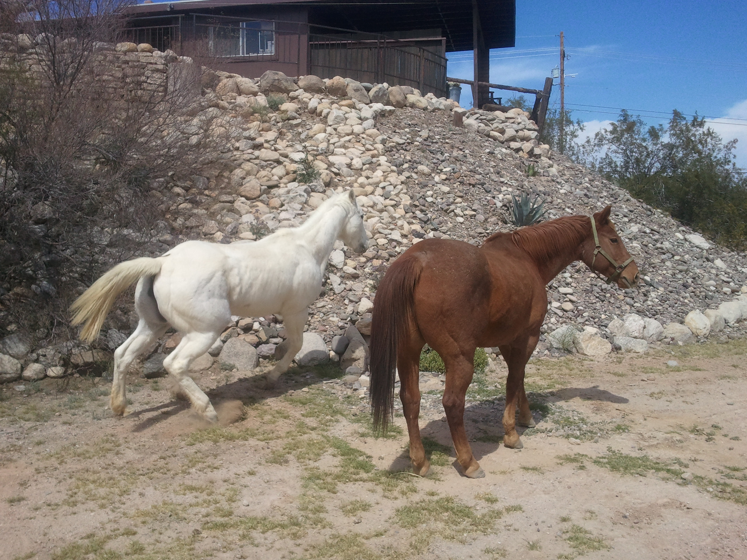 Majestic Horses of the West