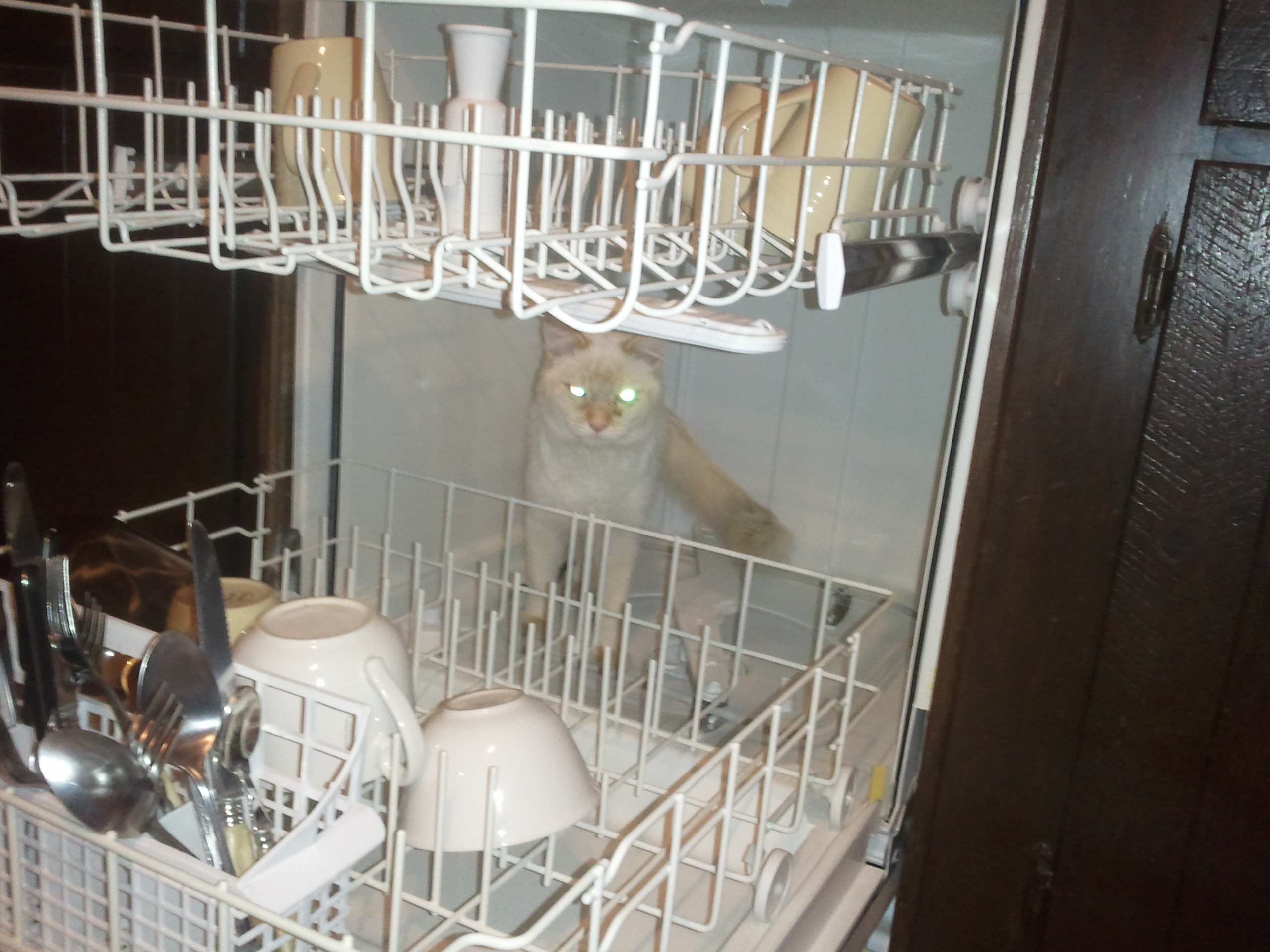 Cat in the dishwasher